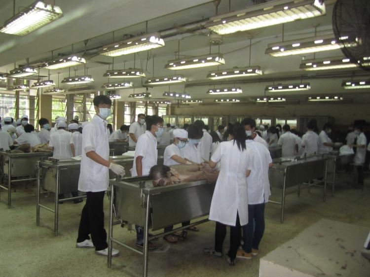 Sinh viên khoa Y thực tập giải phẫu xác người. Ảnh: Phanxipăng