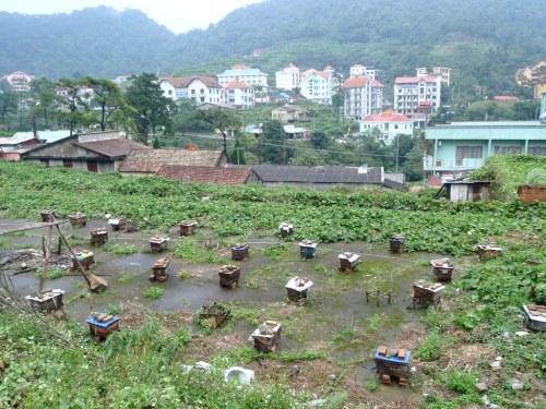 Tam Đảo của Việt Nam. Ảnh: Iltownley