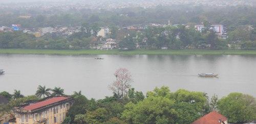 Ngô đồng trổ hoa nơi công viên Tứ Tượng, hữu ngạn sông Hương. Ảnh: Phanxipăng