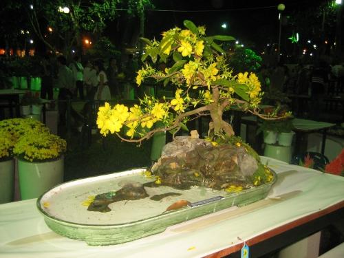 """Bonsai mai vàng """"Huynh đệ vui xuân"""" của nghệ nhân Huỳnh Đức Giác tham dự Hội hoa xuân Mậu Tý 2008 tại Sài Gòn. Ảnh:Phanxipăng"""
