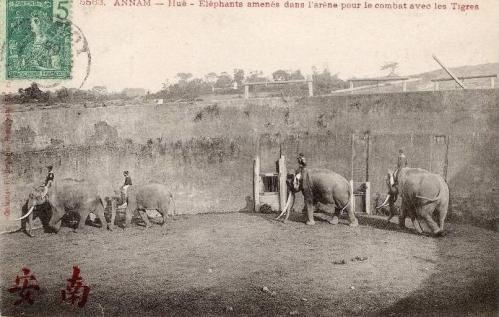 Đưa voi vào Hổ Quyền để chiến đấu với cọp qua bưu ảnh của Pháp