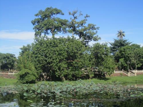 Hồ Tịnh Tâm. Ảnh: Phanxipăng