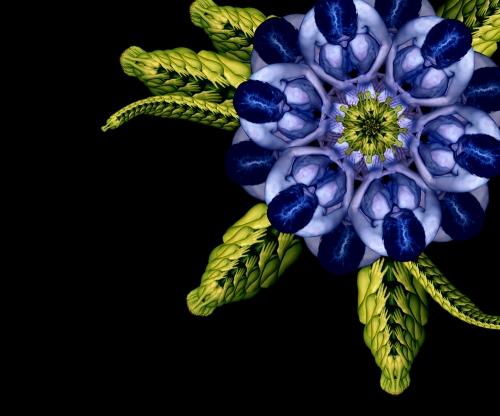 Blue Bell / Hoa chuông xanh