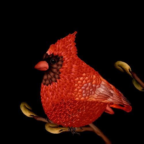 Cardinal / Chim hồng y
