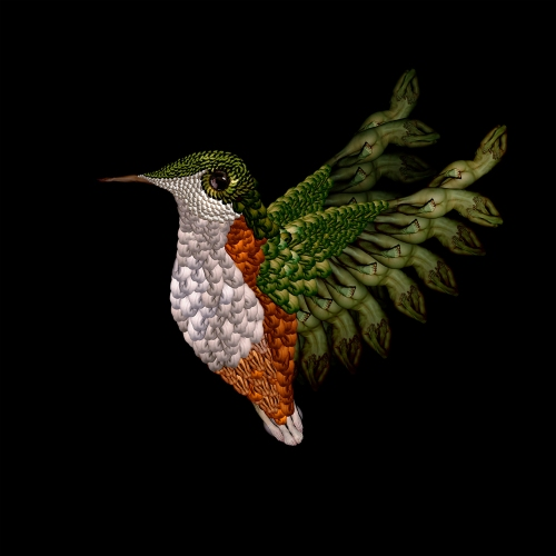 Hummingbird / Chim ruồi