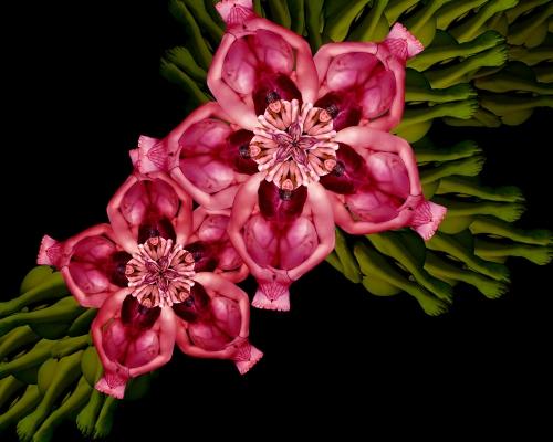 Jungle Pink / Nhiệt đới hồng