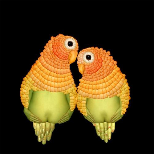 Lovebirds / Chim ác mó Nam Mỹ