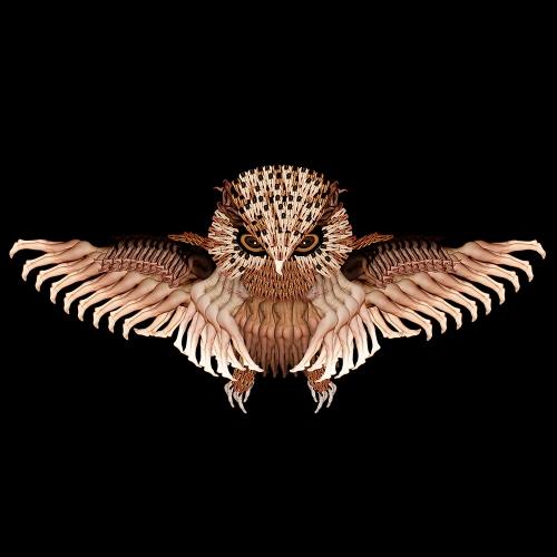 Night Owl / Cú mèo xòe cánh trong đêm