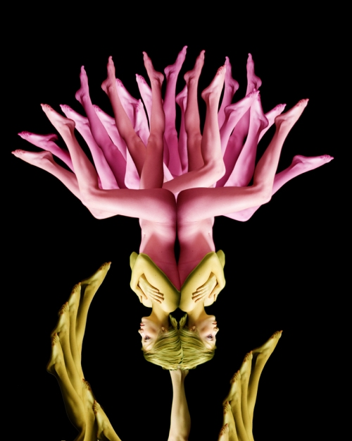 Pink Blossom / Hoa hồng