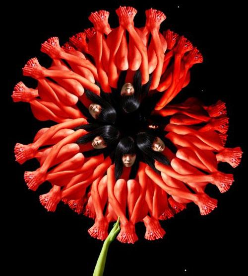 Red Poppy / Anh túc đỏ