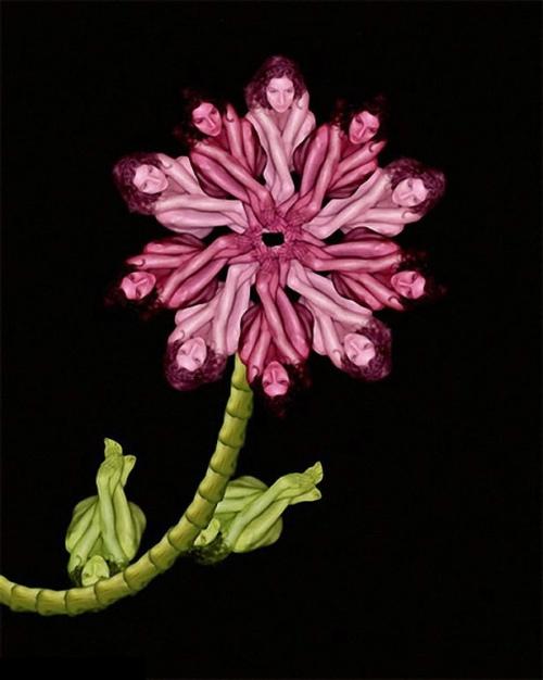 Starflower / Hoa sao