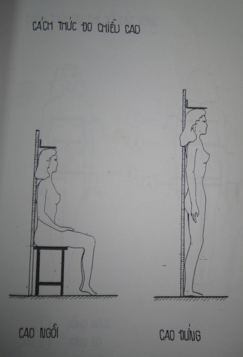 Cách thức đo chiều cao đứng & ngồi. Người vẽ: Trương Thị Sao Mai
